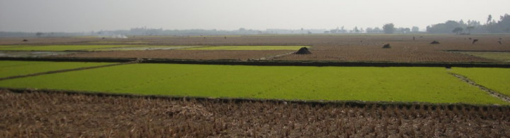cropped-agricultural-field-in-phulbari-by-nasrin-siraj-jan-2010