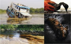 Rare animals and wild bird died by oil spill in the Sundarbans. Photo by Anup Kundus 28 Jan 2015.